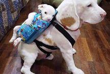 Dogs xoxo♡
