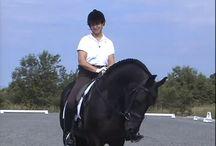 horse stuff / Horse stuff