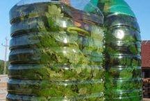 Fertilizante y Pesticida Natural