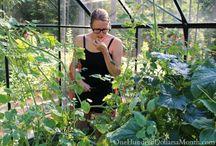 gardening / by Anita Richards