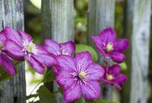 plantation de fleurs et arbustes en pot