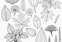 Line drawing leaf