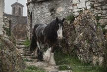 Pferde ❤