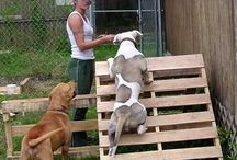 Dog agility diy