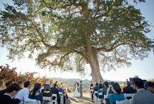 Wedding / Resources