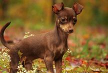 Animals / Dogs, Cats und others