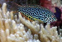 Fishies / by Emma Tarver