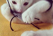 Hip cat toys / Hippe kattenspeeltjes!