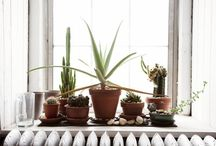 My favorite plants