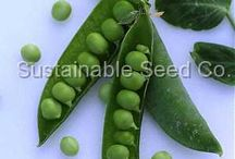 Peas / by Sustainable Seed Co.