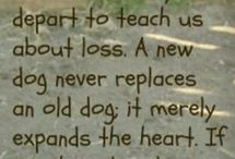 Dogs❤ / by Kendra Howe