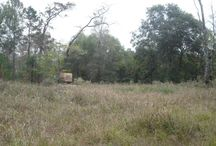 00 Forest Court | Hockley TX | Land For Sale