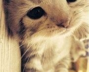 cutest ever! / by Venus Envy