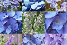 Couleur : Bleu / Déco, objets, nature : bleu