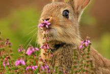 rabbits / For the love of rabbits - a celebration of all cottontails!