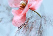 Цветы - нежность...