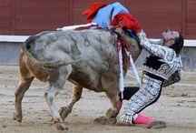 Olé/Bullfighting / Bullfighting / by Renée