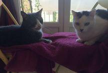 Duchesse Et Berlioz / L'amour entre 2 chats