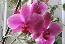 Virágok gondozása