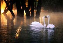 Природа / Красивейшие уголки нашей планеты