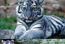 animal color inspiration