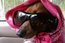 Cool doxies