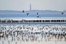 Lauwersmeer natuur