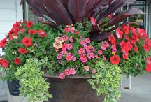 Gardening ~ Pots . Urns . Containers / Beautiful Pots . Urns . Container Gardening. Beautiful Flowers and Plants Combinations / by The Decorated House ~ Donna Courtney