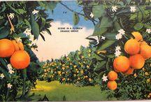 orange /oranges/sinasappels