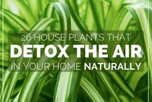 house plant detox air