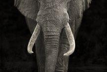 Beautiful animals ... gorgeous creatures