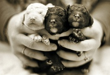 My puppies.  / by Lydia Harriman