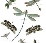Graphics: Butterflies & Dragonflies