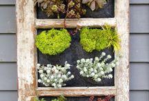 Jardim plantas folhagens