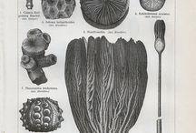 Fossils / ископаемые, скелеты, аммониты графика