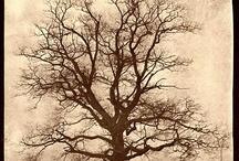 William-Henry Fox Talbot