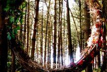 trädgård skog