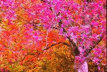 pink + orange  / by Monica Rozzi