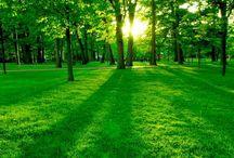 Zelený ráj - Matka Příroda