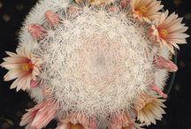 Cacti & Succulents / by Katie Katie