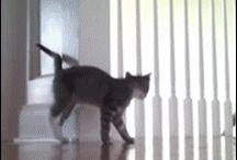 gifs I'm dying over!