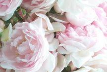Virágok, Kert