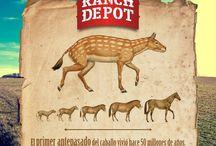 Dato Curioso / ¿Sabías que el caballo es uno de los animales con los ojos más grandes sobre la tierra?..