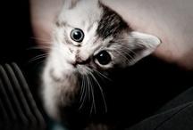 Aww Animals / by Jennifer Lawson