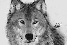 Wolf - Wilk