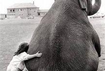 Słonie, słoniątka, słoniki ;-)