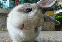 Große Liebe Kaninchen