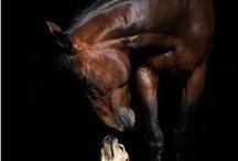 horses horses horses