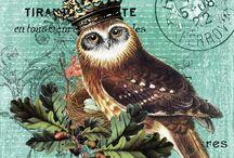Owl (Baykuş)