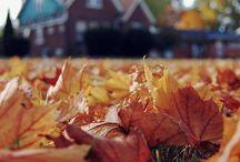 Autumn's Grief